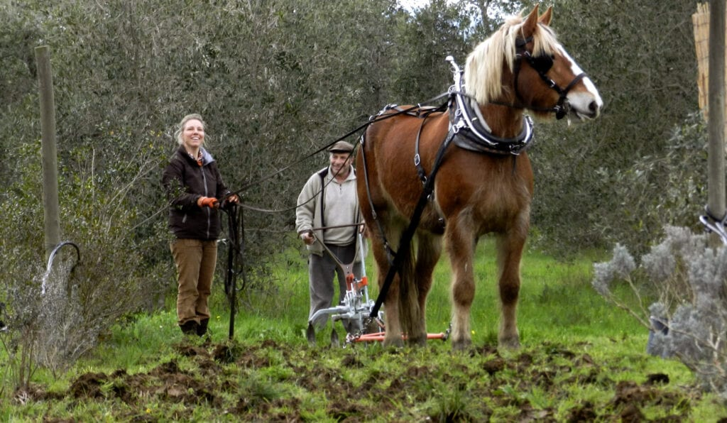 About WWOOF