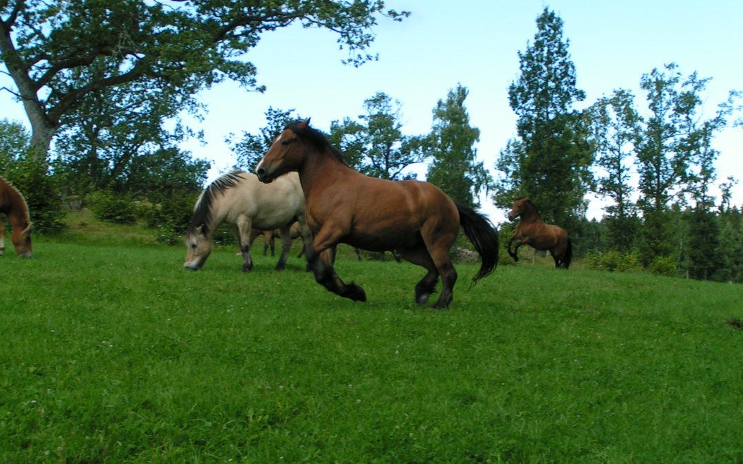 Workhorse farm